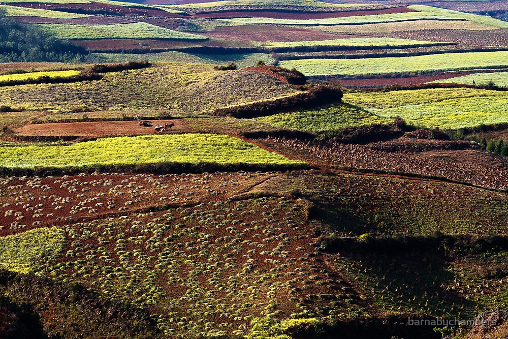 The Patchwork of Donchuan by barnabychambers
