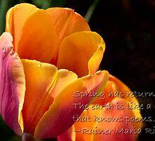 Spring is here! by Celeste Mookherjee