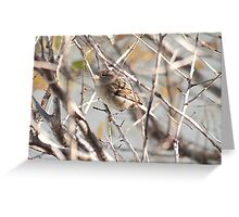 Where did the camouflage go? Greeting Card