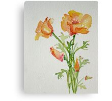 Bunch of California Poppies Canvas Print