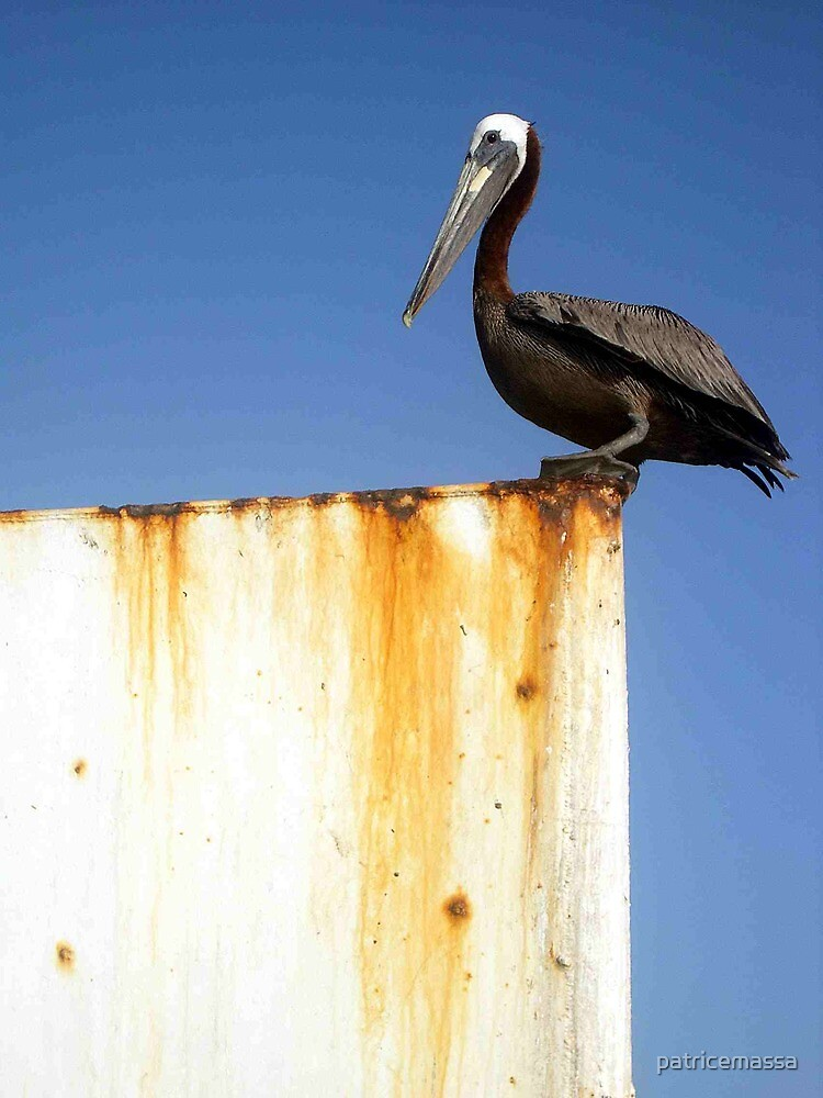 Pelican  by patricemassa