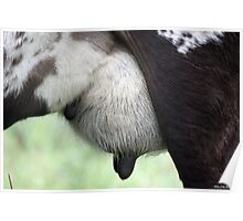 Cows udder Poster