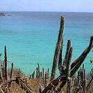 cactus Testigos Venezuela  by patricemassa