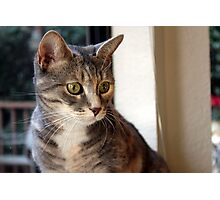 Wide-eyed Kitty Photographic Print