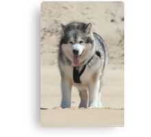 Wolf of the Desert Canvas Print