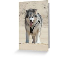 Wolf of the Desert Greeting Card
