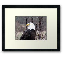 Eagle in the Morning Rain Framed Print