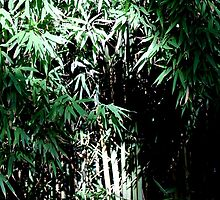 Lush Bamboo Forest by Matt Stojko