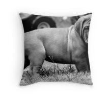 dogue de bordeaux puppy Throw Pillow