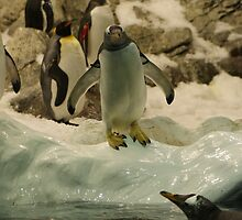 Young Penguin by jonah71