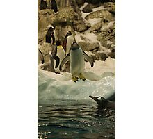 Young Penguin Photographic Print