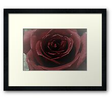 Textured Red Rose Framed Print
