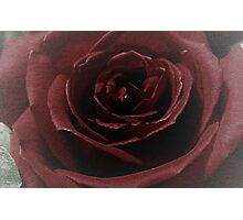 Textured Red Rose Photographic Print