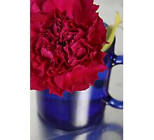 Flower Cup Photographic Print
