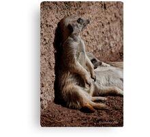 Those lazy meerkats! Canvas Print