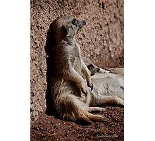 Those lazy meerkats! Photographic Print