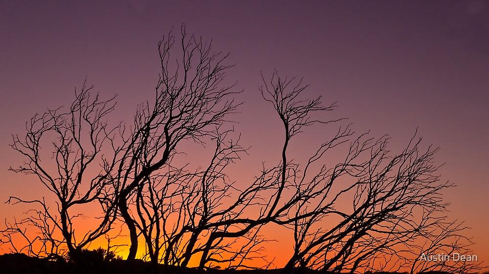 Dead Wood by Austin Dean