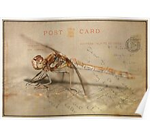 Dragonfly Postcard Poster