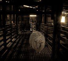 Where sheep used to roam... by Rosie Appleton