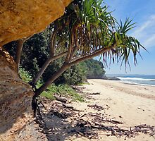 Pandanus Palms at Valla Beach by George Petrovsky