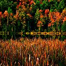 Fall Colors by Andre Faubert