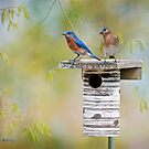 "Nothing says ""Spring"" like bluebirds by Bonnie T.  Barry"