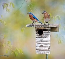 """Nothing says """"Spring"""" like bluebirds by Bonnie T.  Barry"""