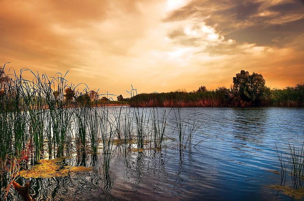 Lake by Svetlana Sewell