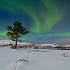 Aurora over the pine tree by Frank Olsen