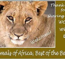 Animals of Africa, Best of the best by Magriet Meintjes