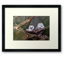 Two Owls Framed Print