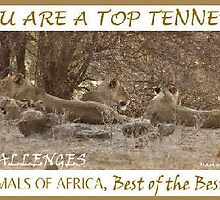 Challenge Top Ten Banner by Magriet Meintjes