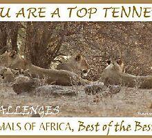 Challenge Top Ten Banner by Magriet Meintjes
