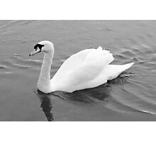 Black & White Swan Photographic Print