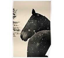 Black Horse VS. Snow Storm Poster