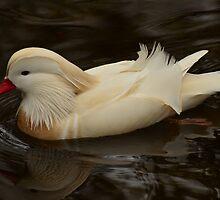 Mandarin Duck / Mandarijn eend (white version) by Jacqueline van Zetten