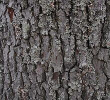 Mossy Bark by Cleave