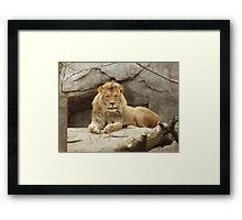 Lion - paws up Framed Print
