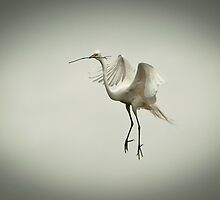 In Love & Walking On Air by Joe Jennelle