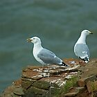 The Yodelling Seagull by VoluntaryRanger