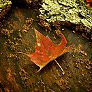 Red Leaf by Andre Faubert