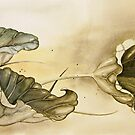 waterlily leaves by Andrea Preda