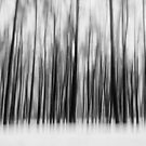 trees by thomasrichter