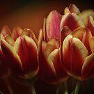 Happy tulips by EbyArts