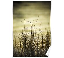 Sea grass with textured background. Poster