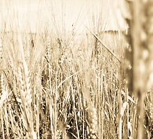 Sepia Wheat by evergleammm