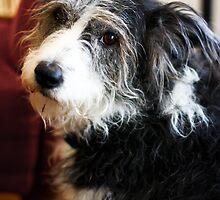 Maggie the Dog by evergleammm
