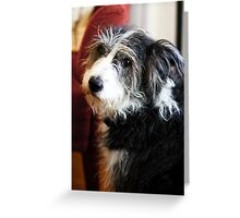 Maggie the Dog Greeting Card