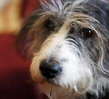 Maggie Closeup  by evergleammm