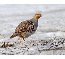 """Member of the """"Group of Seven"""" - Gray Partridge :) Photographic Print"""
